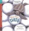 One Tiny Turtle: Read and Wonder - Nicola Davies, Jane Chapman