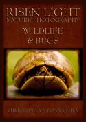 Risen Light Nature Photography of Wildlife & Bugs - Donna Shea, Christopher Shea