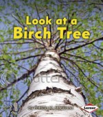 Look at a Birch Tree - Patricia M. Stockland, Catherine Ferne