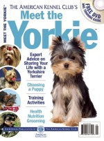 Meet the Yorkie - American Kennel Club, American Kennel Club