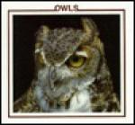Owls - Lynn M. Stone