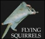 Flying Squirrels - Mary Ann McDonald