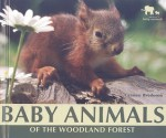 Baby Animals of the Woodland Forest - Carmen Bredeson