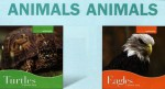 Animals, Animals Set 7 - Benchmark Books, Judith Jango-Cohen
