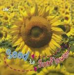Seed to Sunflower - Camilla De la Bédoyère