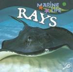 Rays - Lynn M. Stone