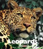 Leopards - Mary Ann McDonald
