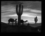 The Desert Cold - David Tallerman