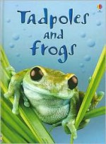 Tadpoles and Frogs (Usborne Beginners) - Anna Milbourne, Patrizia Donaera, Zoe Wray