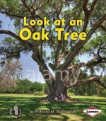 Look at an Oak Tree - Patricia M. Stockland, Catherine Ferne
