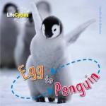 Egg to Penguin: by Camilla De la Bedoyere - Camilla De la Bédoyère