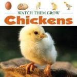 Chickens - Judy Wearing