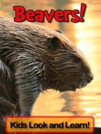 Beavers! Learn About Beavers and Enjoy Colorful Pictures - Look and Learn! (50+ Photos of Beavers) - Becky Wolff