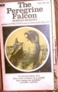 The Peregrine Falcon - Robert Murphy