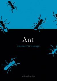 Ant - Charlotte Sleigh