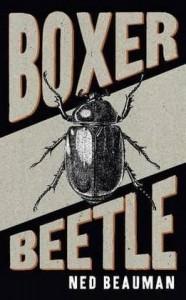 Boxer Beetle -