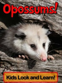 Opossums! Learn About Opossums and Enjoy Colorful Pictures - Look and Learn! (50+ Photos of Opossums) - Becky Wolff