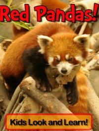Red Pandas! Learn About Red Pandas and Enjoy Colorful Pictures - Look and Learn! (50+ Photos of Red Pandas) - Becky Wolff
