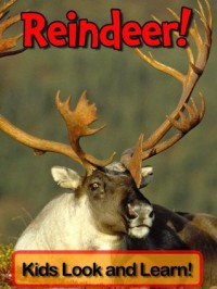 Reindeer! Learn About Reindeer and Enjoy Colorful Pictures - Look and Learn! (50+ Photos of Reindeer) - Becky Wolff