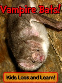 Vampire Bats! Learn About Vampire Bats and Enjoy Colorful Pictures - Look and Learn!  - Becky Wolff