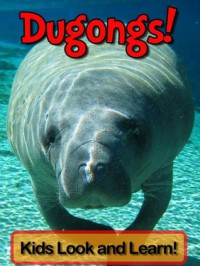 Dugongs! Learn About Dugongs and Enjoy Colorful Pictures - Look and Learn! (50+ Photos of Dugongs) - Becky Wolff