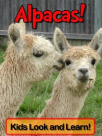 Alpacas! Learn About Alpacas and Enjoy Colorful Pictures - Look and Learn! (50+ Photos of Alpacas) - Becky Wolff