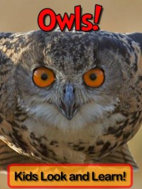 Owls! Learn About Owls and Enjoy Colorful Pictures - Look and Learn! (50+ Photos of Owls) - Becky Wolff