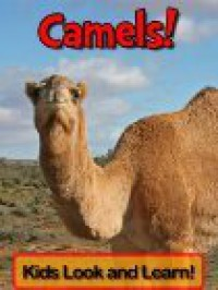 Camels - Becky Wolff