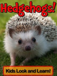 Hedgehogs! Learn About Hedgehogs and Enjoy Colorful Pictures - Look and Learn! (50+ Photos of Hedgehogs) - Becky Wolff