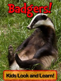 Badgers! Learn About Badgers and Enjoy Colorful Pictures - Look and Learn! (50+ Photos of Badgers) - Becky Wolff