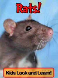 Rats! Learn About Rats and Enjoy Colorful Pictures - Look and Learn! (50+ Photos of Rats) - Becky Wolff