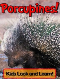 Porcupines! Learn About Porcupines and Enjoy Colorful Pictures - Look and Learn! (50+ Photos of Porcupines) - Becky Wolff