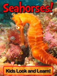 Seahorses! Learn About Seahorses and Enjoy Colorful Pictures - Look and Learn! (50+ Photos of Seahorses) - Becky Wolff