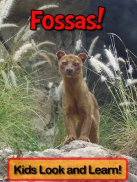 Fossas! Learn About Fossas and Enjoy Colorful Pictures - Look and Learn! (50+ Photos of Fossas) - Becky Wolff