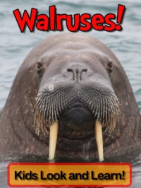 Walruses! Learn About Walruses and Enjoy Colorful Pictures - Look and Learn! (50+ Photos of Walruses) - Becky Wolff