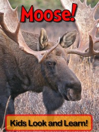 Moose! Learn About Moose and Enjoy Colorful Pictures - Look and Learn! (50+ Photos of Moose) - Becky Wolff