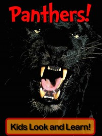 Panthers! Learn About Panthers and Enjoy Colorful Pictures - Look and Learn! (50+ Photos of Panthers) - Becky Wolff