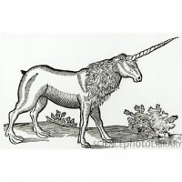The Unicorn Crisis (The Hidden Academy #1) - Jon  Rosenberg