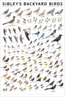 Sibley's Backyard Birds: Western North America - David Allen Sibley