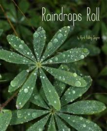 Raindrops Roll - April Pulley Sayre