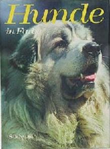 Hunde in Farbe - Wendy Boorer