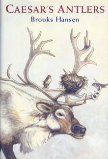 Caesar's Antlers - Brooks Hansen