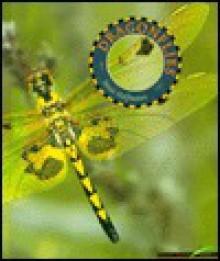 Dragonflies - Janet Halfmann