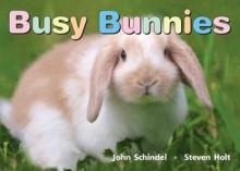 Busy Bunnies - John Schindel
