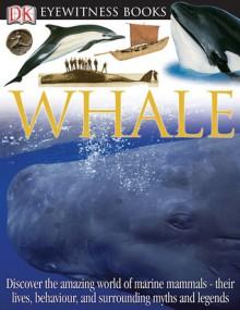 Whale - Vassili Papastavrou