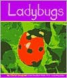 Ladybugs - Cheryl Coughlan, Gail Saunders-Smith