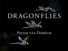 Dragonflies: Magnificent Creatures of Water, Air, and Land - Pieter van Dokkum