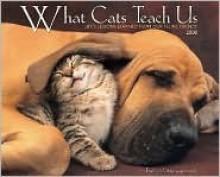 What Cats Teach Us 2008 Calendar - Willow Creek Press