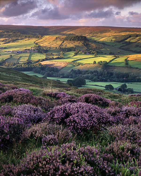 heather. moors. light.