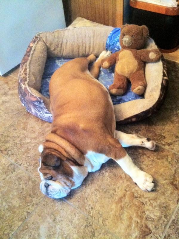 Fat Dog Sleeping